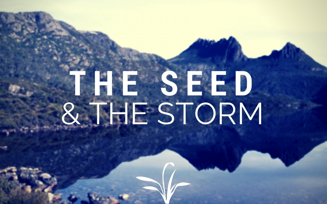 Seeds and Storms