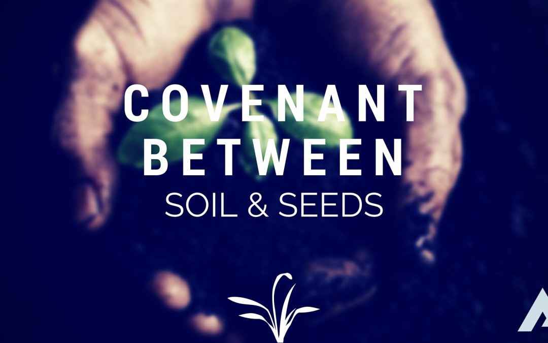 Seeds and Soil